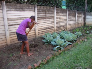 youth-for-christ-gardening